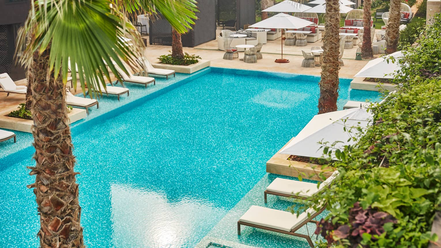 Blue outdoor swimming pool lined by white lounge chairs, umbrellas, palm trees