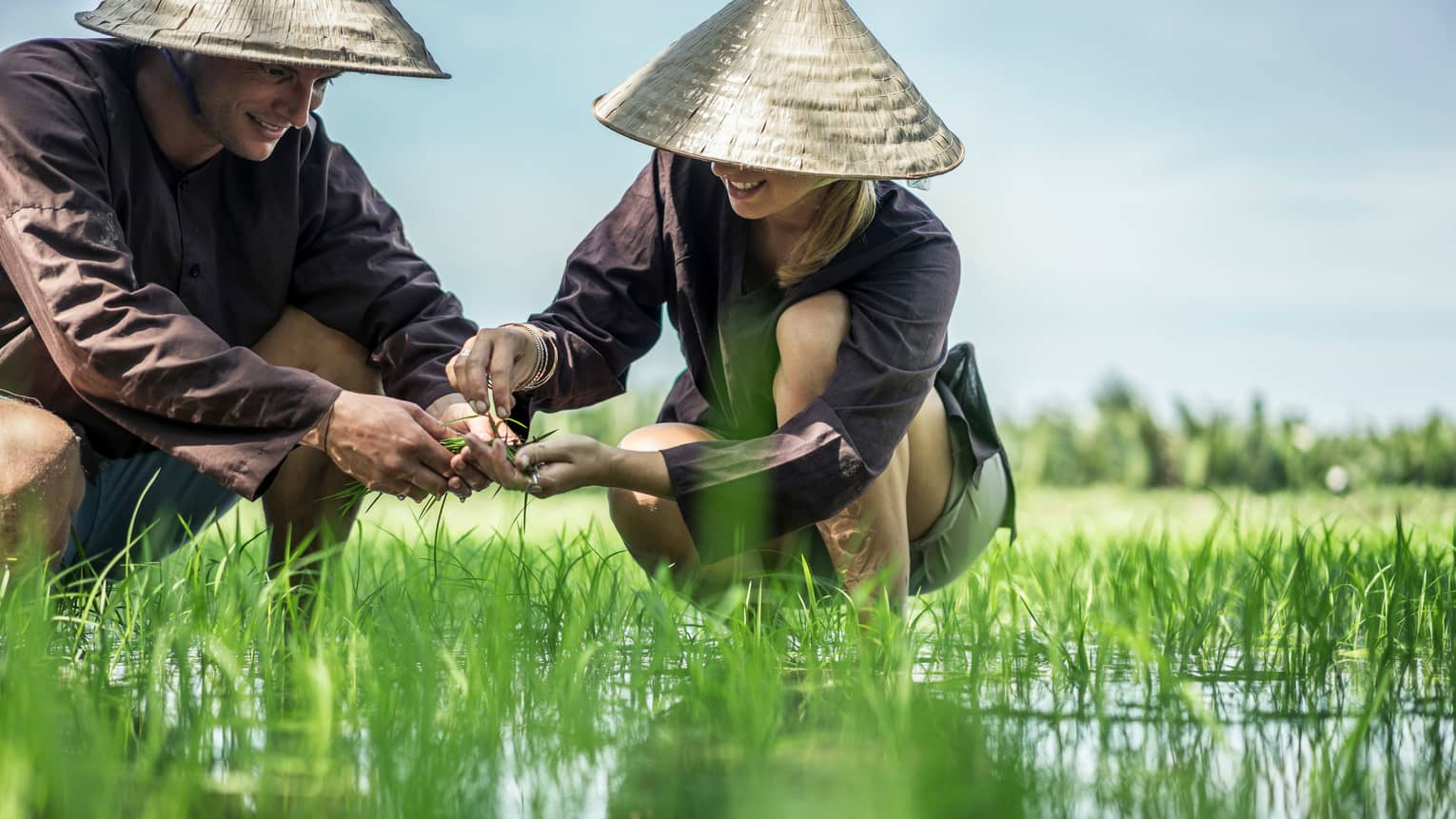 Couple wearing traditional farmer hats plant rice seedlings in water, grass