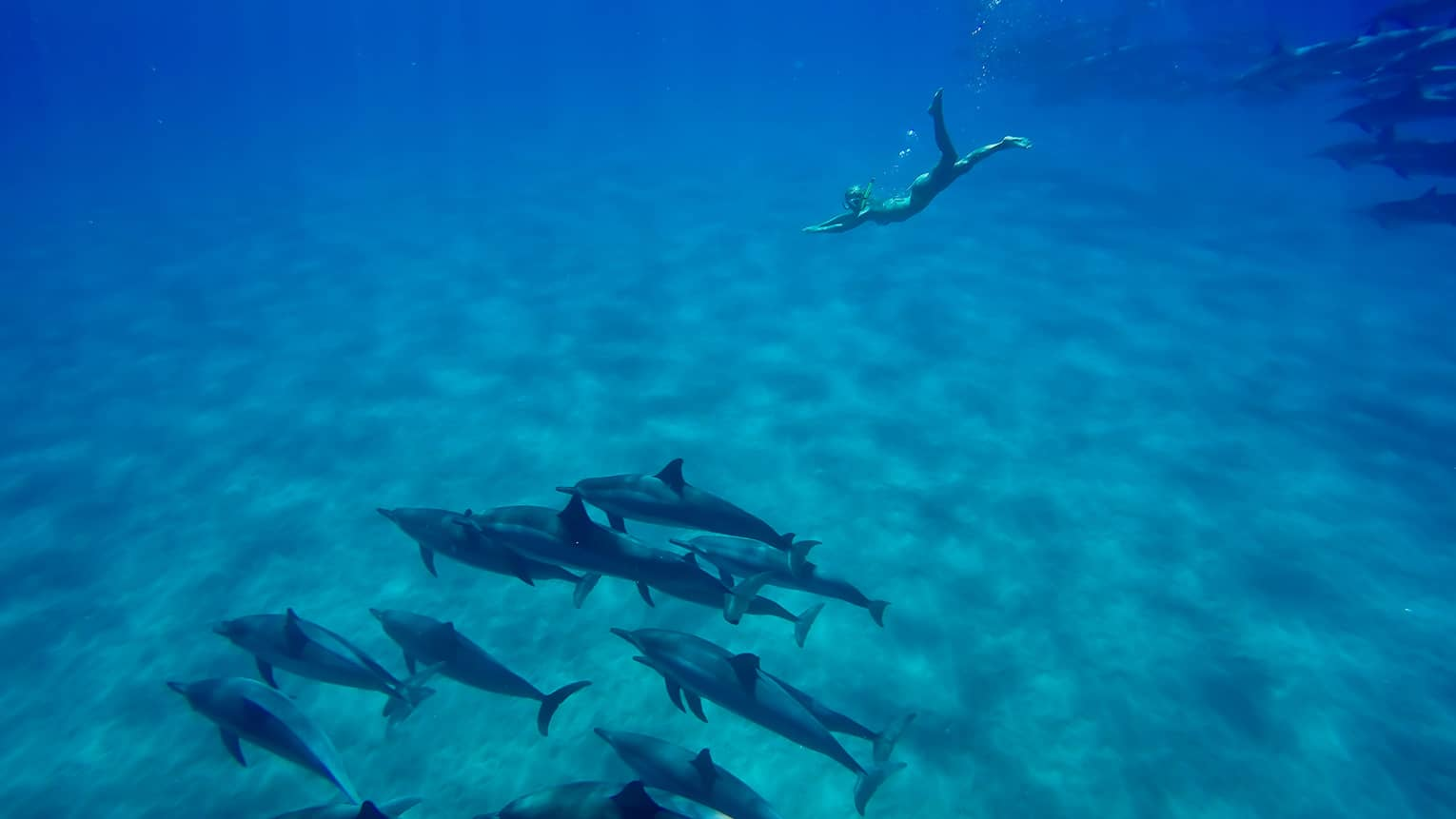 Underwater view of woman with snorkel, mask swimming to dolphin pod on ocean floor