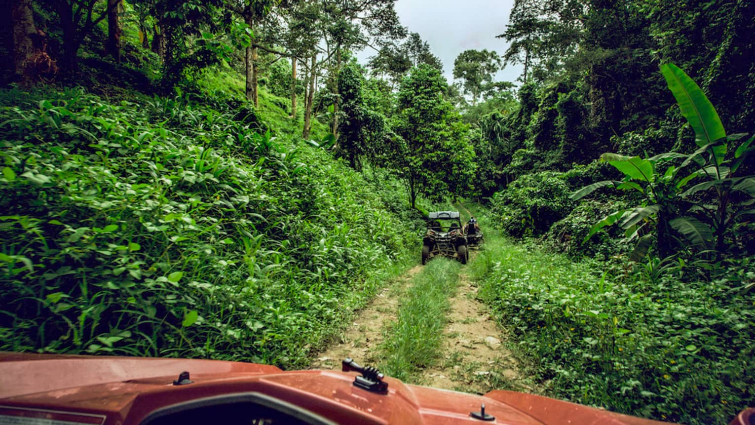 ATVs riding down dirt path in tropical forest