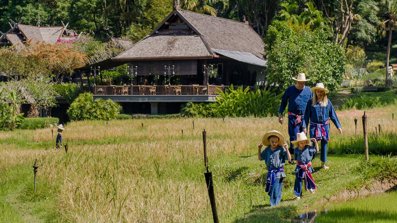 Couple and two young children wearing traditional Thai farmer's outfits walk through rice field