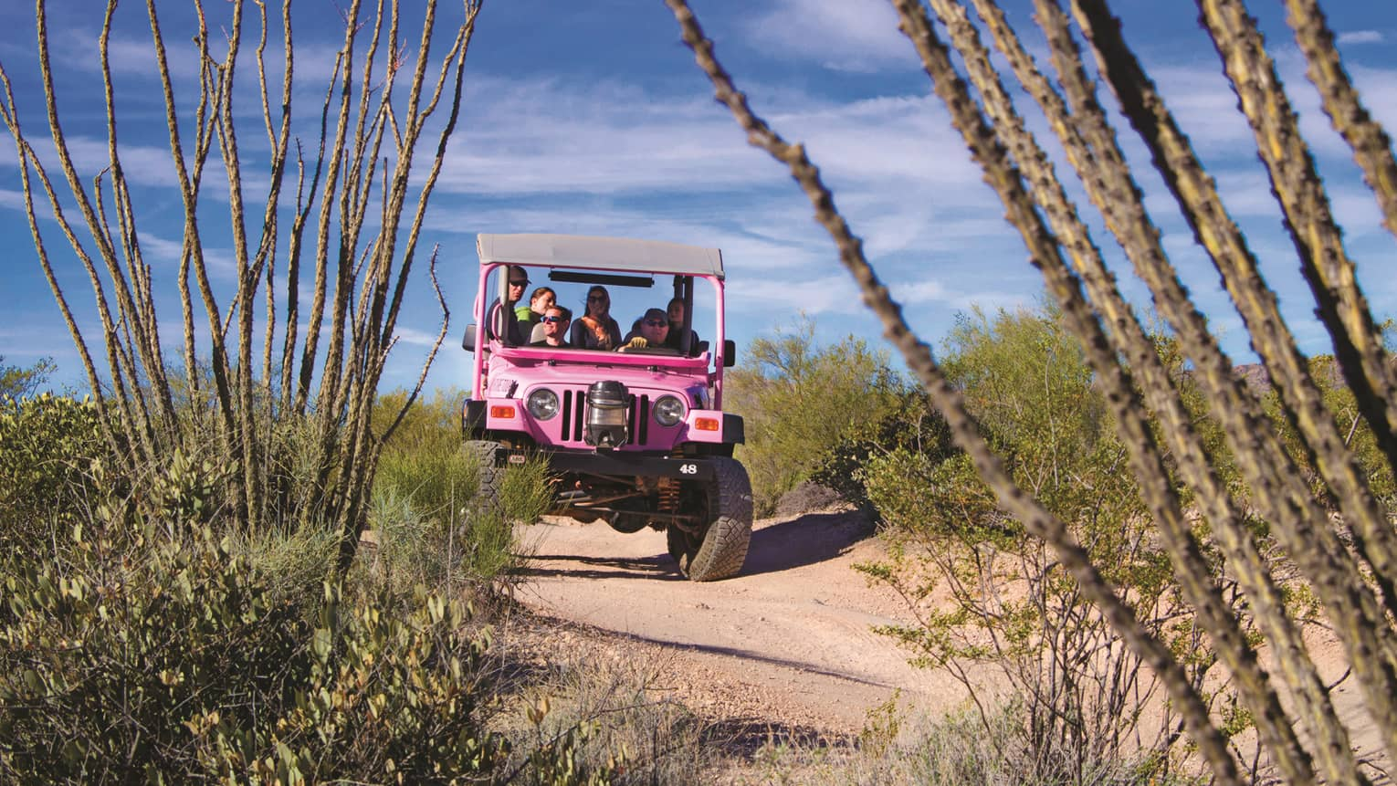 Pink Jeep with tourists drives down desert road past shrubs, cacti