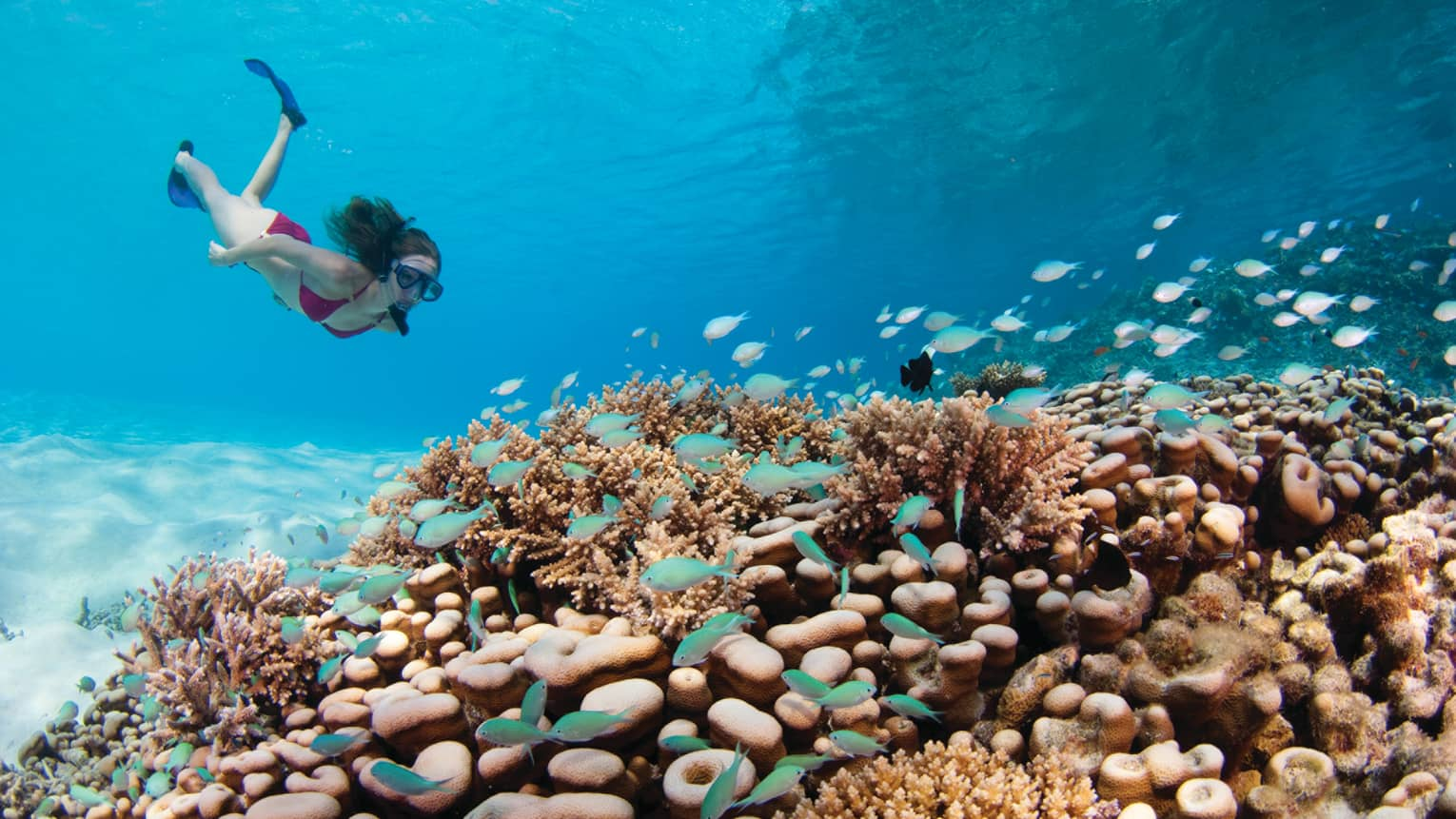 Snorkeller swims underwater towards colourful coral reef, blue tropical fish