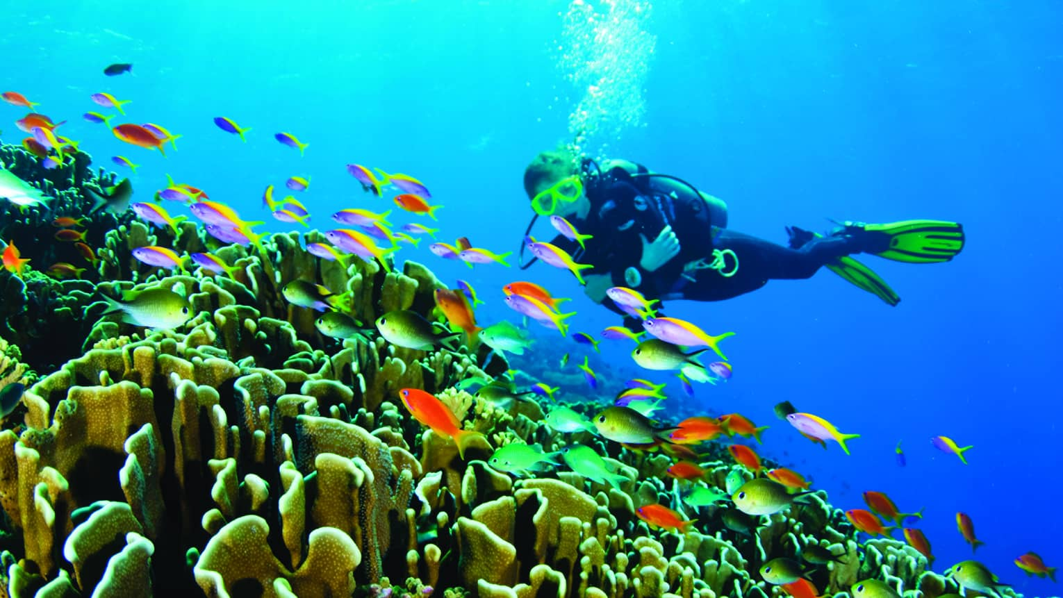 Scuba diver swims over colourful tropical fish, coral