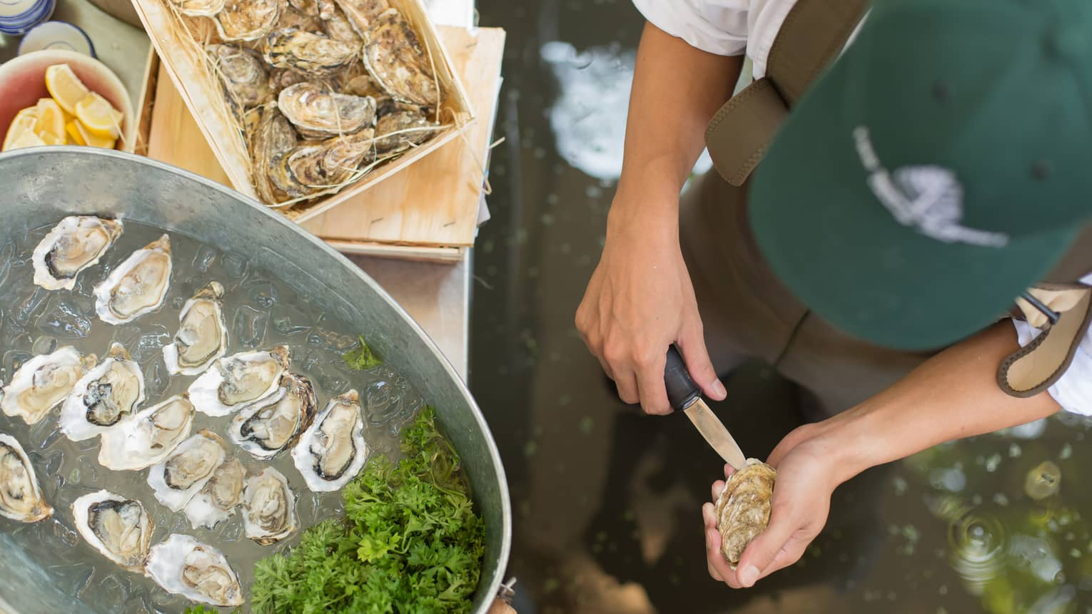 Aerial view of chef shucking oyster in front of steel tub with half shell oysters on ice