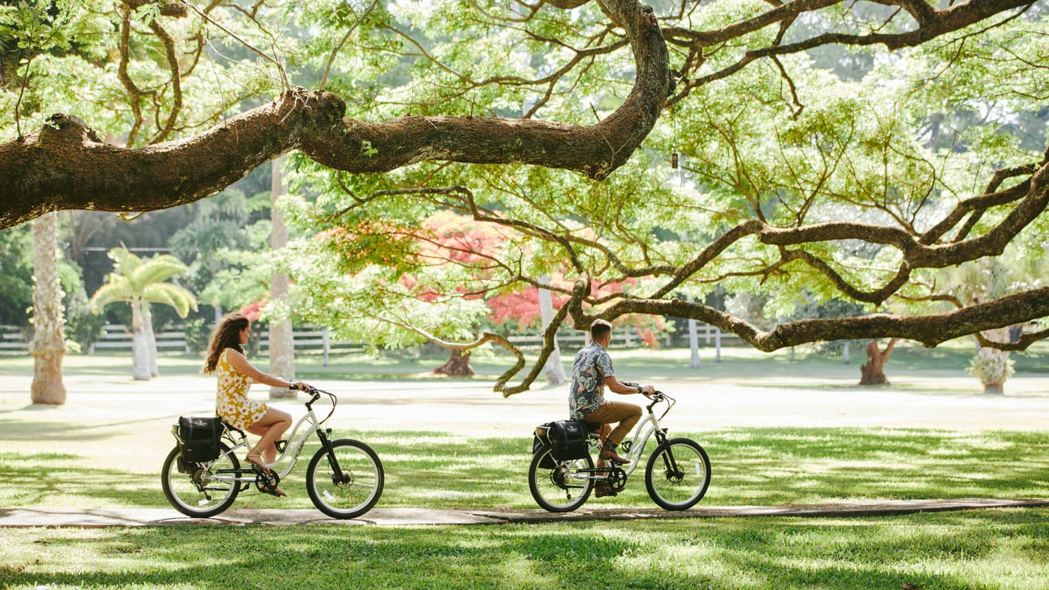 Man and woman ride bicycles through a grove of trees