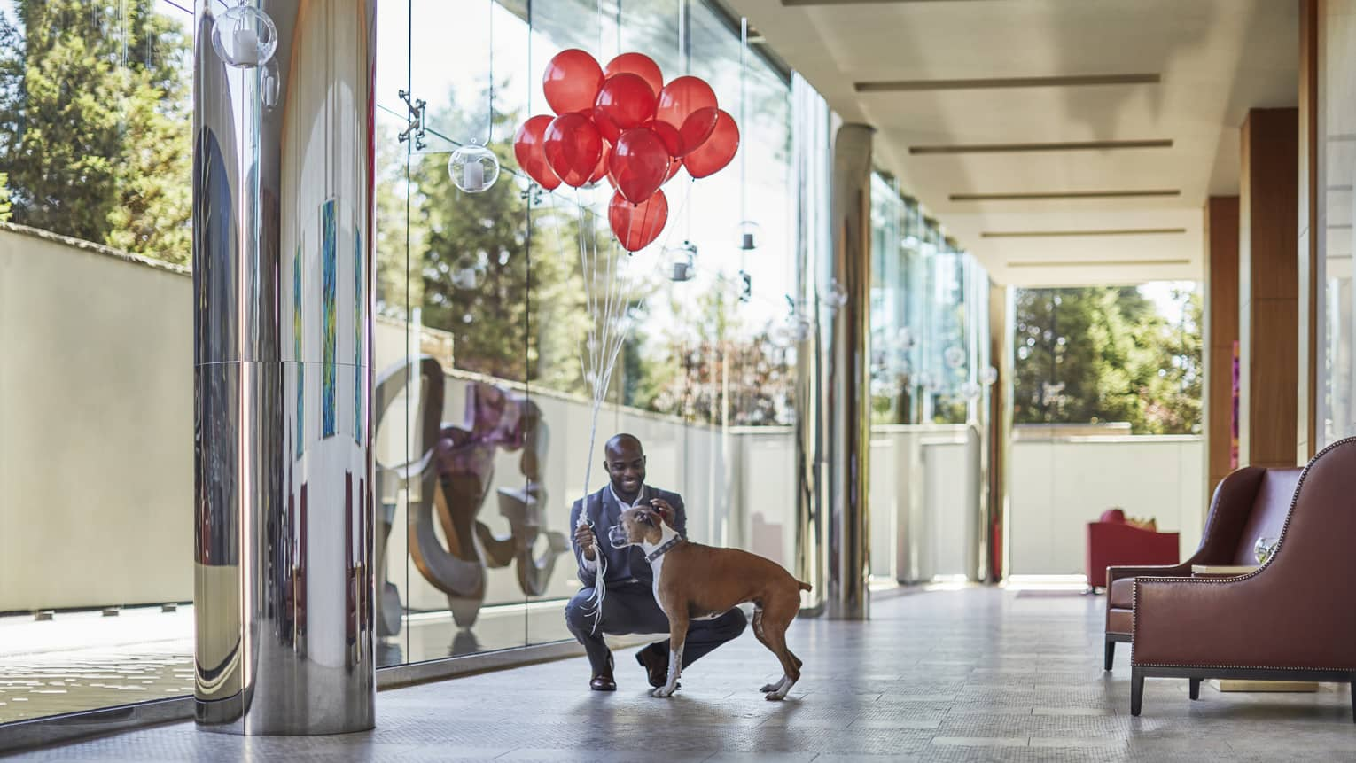 Man in suit holding bunch of red balloons kneels down to pet boxer dog in hotel hallway