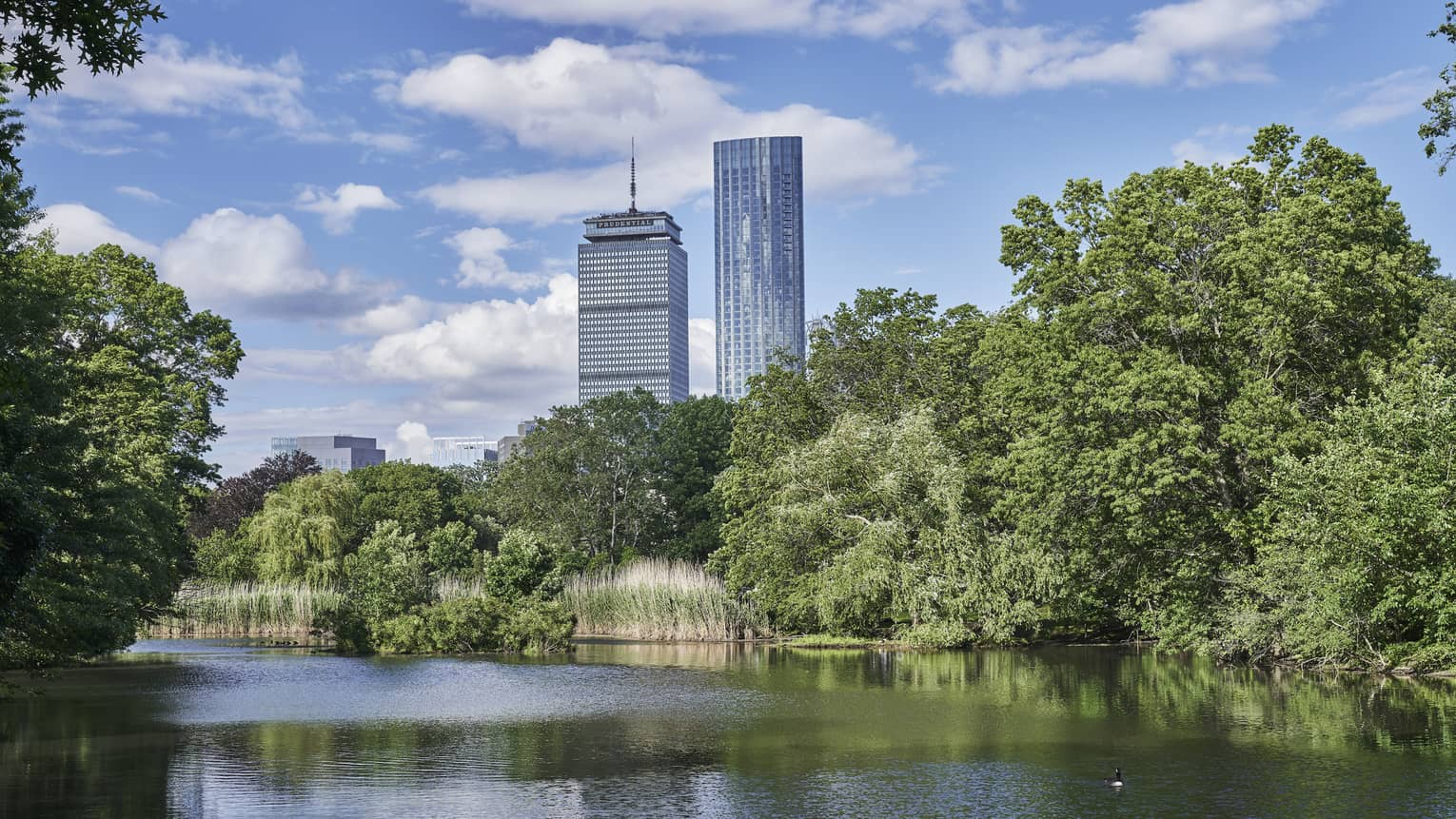 Trees line the river, overlooking downtown boston