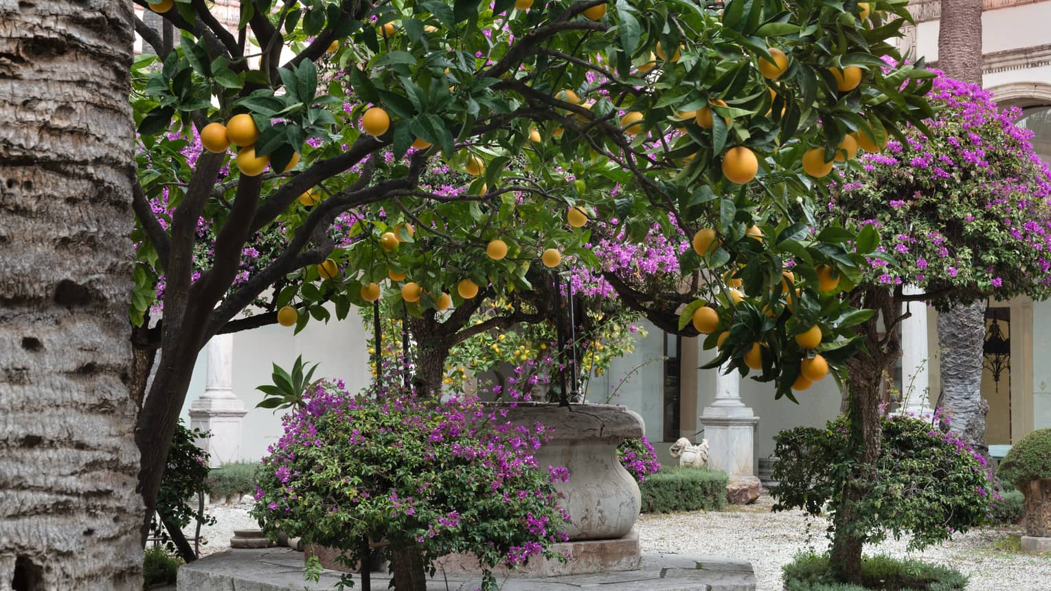Courtyard with lemon trees and purple flowers
