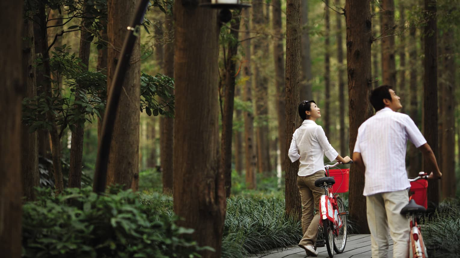 Couple walks bicycles through forest nature trail, looks up at trees
