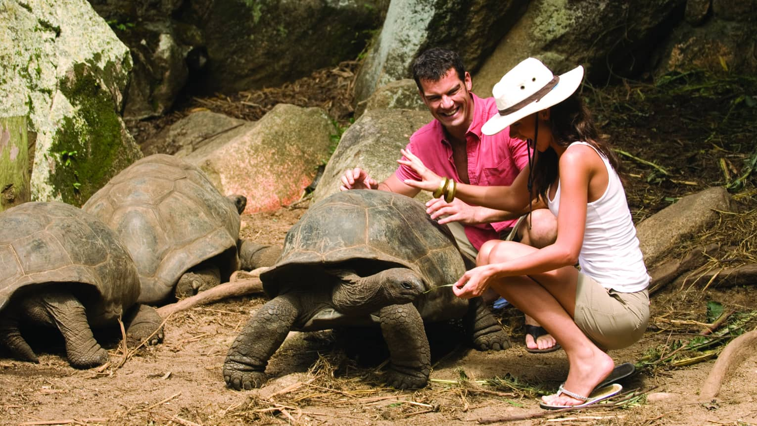 Man in pink button-up shirt and woman in white sunhat laugh, kneel above two Aldabra giant tortoises