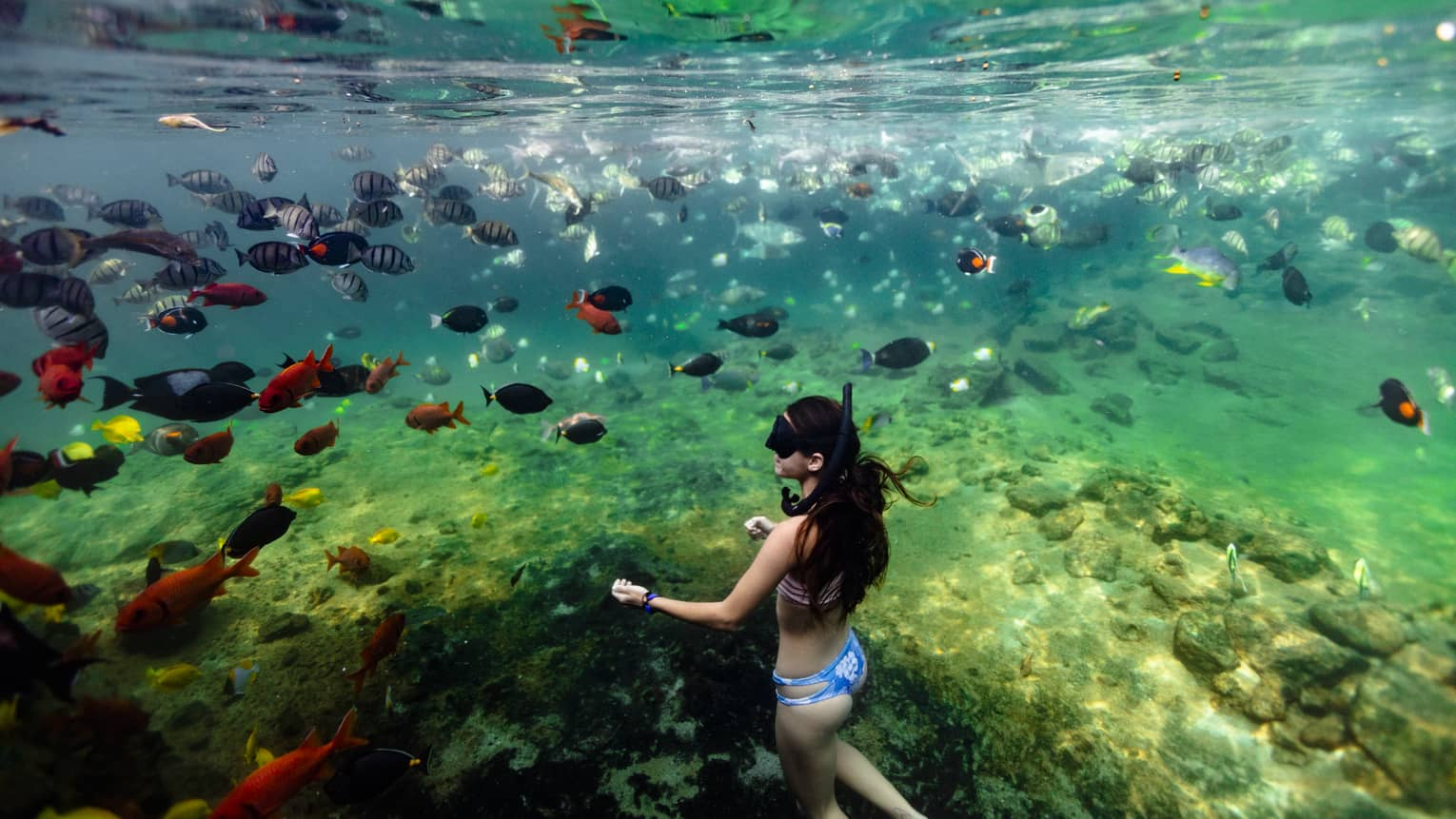 A woman snorkels with a school of fish