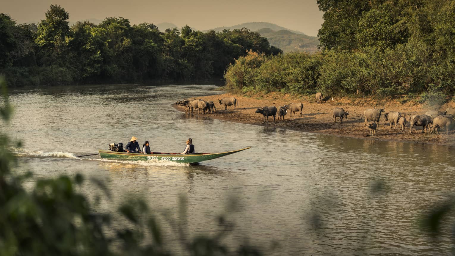 Longtail boat passes animals on the shore of the Ruak river