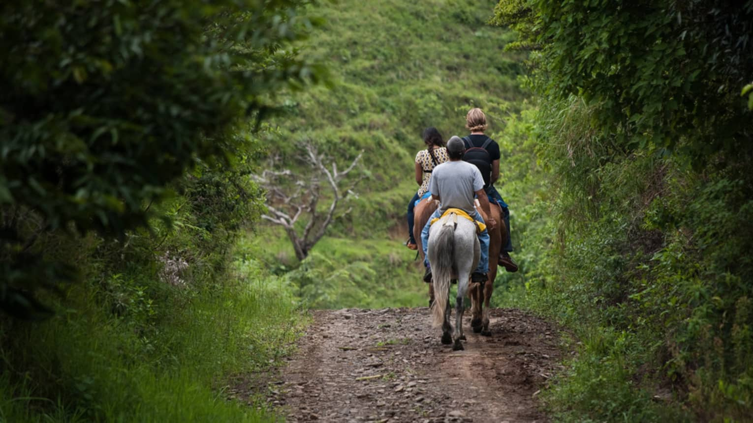 Back view of people riding horses down trail in tropical forest