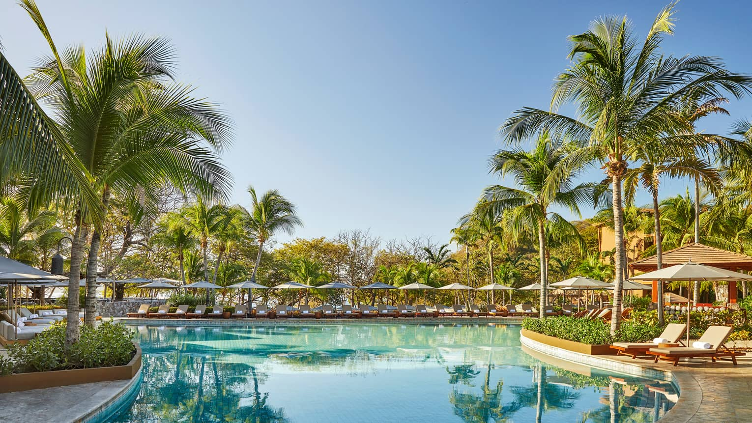 Tall palm trees around sunny outdoor swimming pool lined with patio chairs, umbrellas