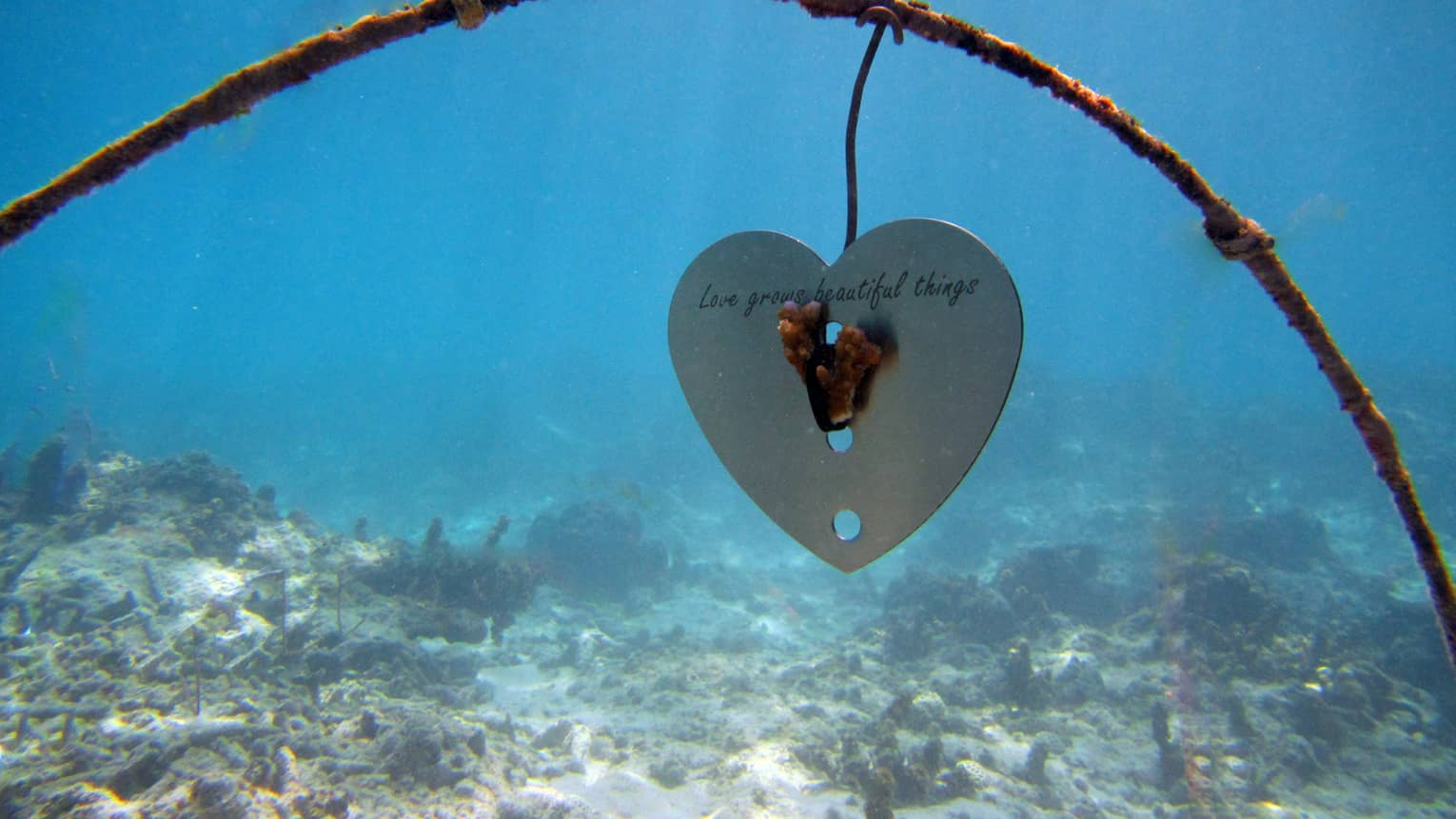 "Underwater view of a heart-shaped metal frame with piece of coral, words ""love grows beautiful things."""