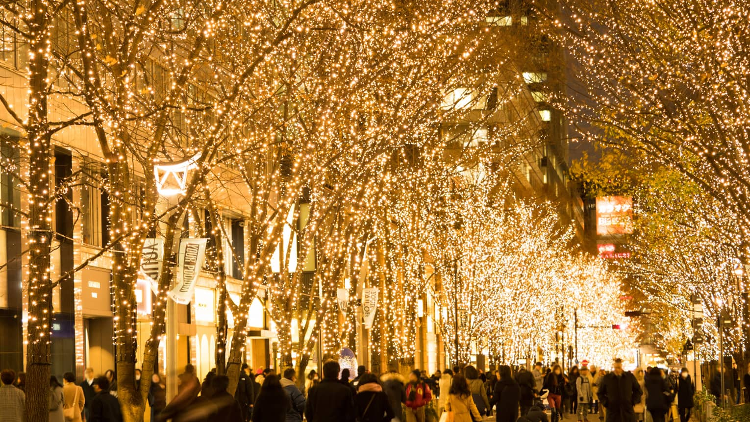 Trees on a street in Kyoto lit by fairy lights as people walk by