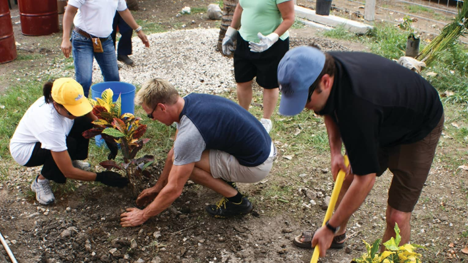 Group of adults wearing hats, garden gloves help plant trees and tropical plants