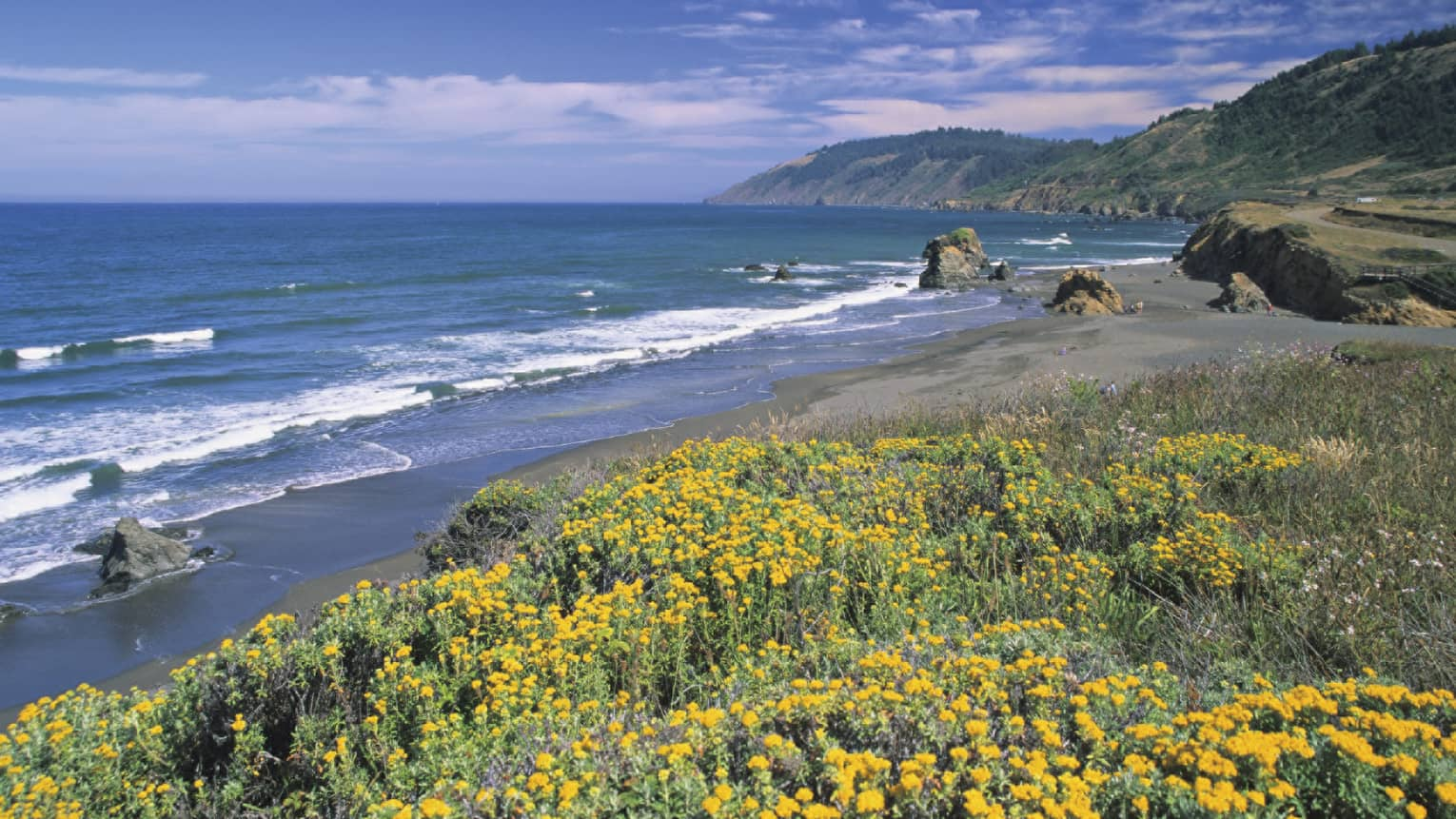 Yellow flowers along California coast, big rocks and waves