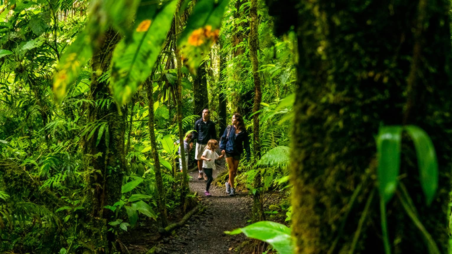 Young family of four hike through forest trail under lush canopy of tropical trees