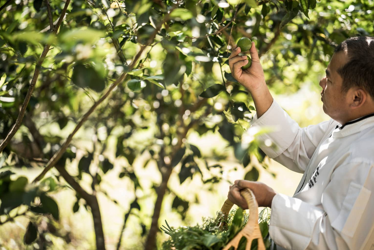A Chef at Four Seasons Tented Camp Golden Triangle picks ingredients for the Feast on Nature experience