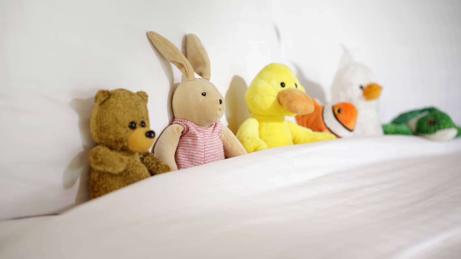 Stuffed bear, bunny and ducks tucked into hotel bed blanket against pillow
